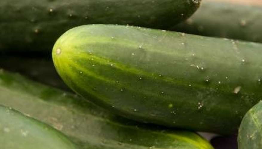 Burpless cucumbers are considered easy to grow.