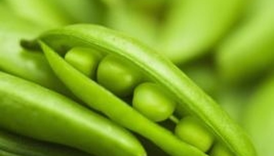 Peas have been a popular vegetable for hundreds of years.