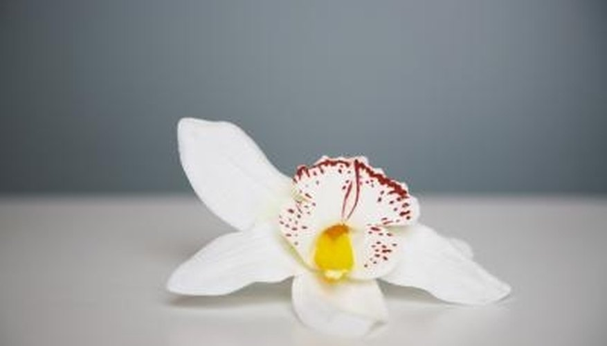 Preserving orchids allows you to enjoy their beauty for a long time.