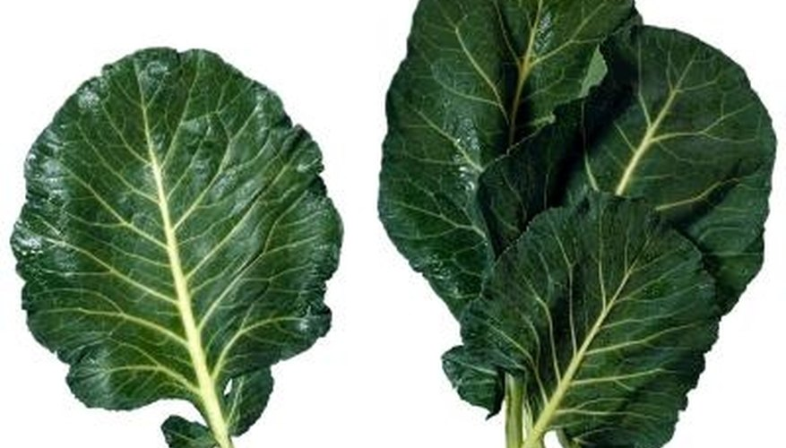 Give collard green plants nitrogen-rich soil.