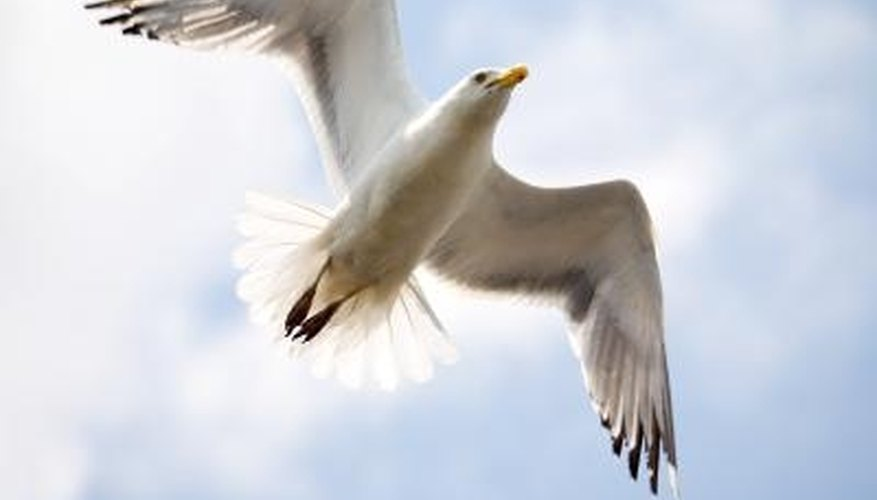 Seagulls can cause a lot of headache if they come in large numbers.