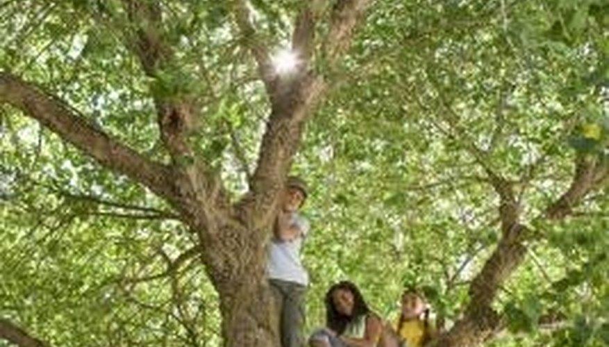 When a tree limb falls, you should get rid of it.