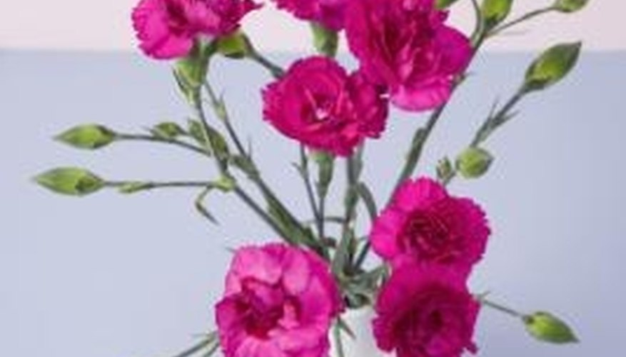 Miniature carnations come in sprays.