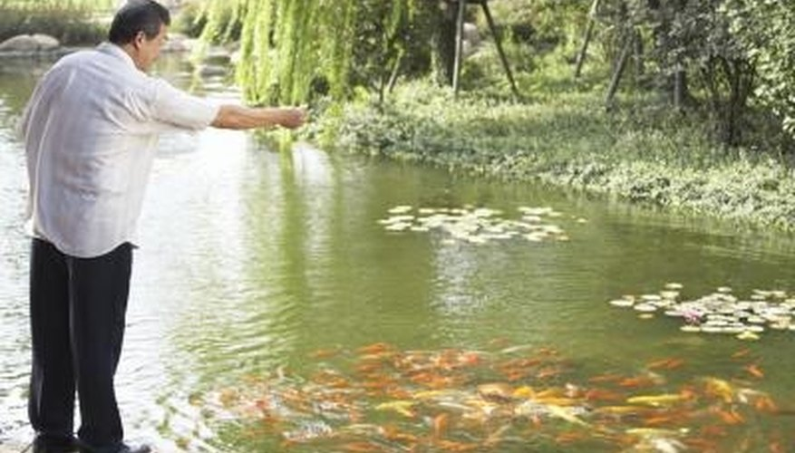 Ornamental ponds refreshed with municipal water supplies may require dechlorination.