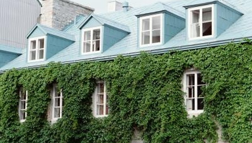 Ivy can completely cover your house if left unchecked.