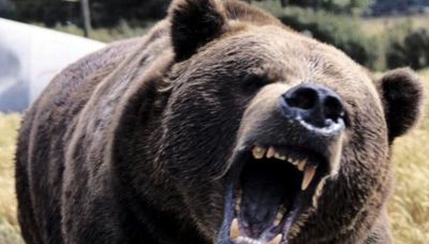 Recommended Grizzly Calibers