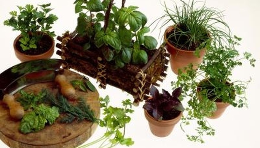 Plant an herb garden in the vegetable garden or in pots.