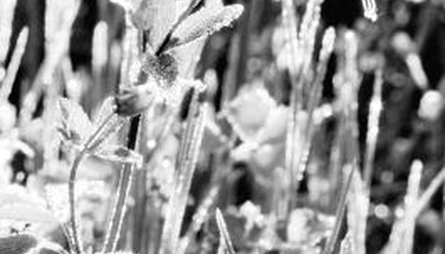 Watch the weather reports for news of frost in the early spring and late fall.