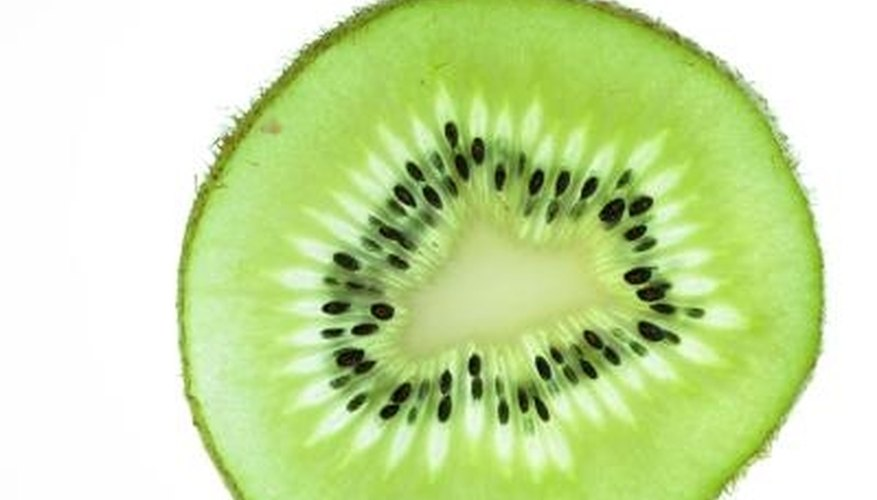 Kiwis require protection during planting, but survive frost and cold temperatures when established.