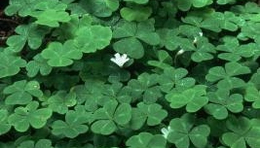 Some oxalis plants are weedy, some are desirable, but all are perennial.