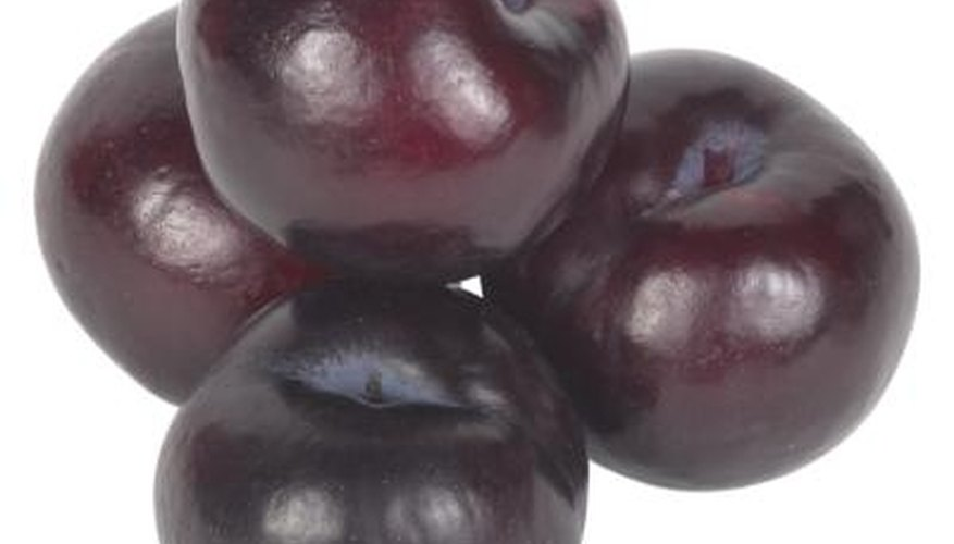 Italian plums are easy to dry into prunes.