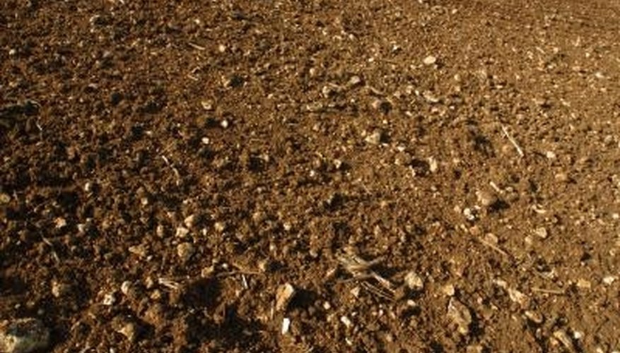 Loose soil is easily eroded by wind and water.