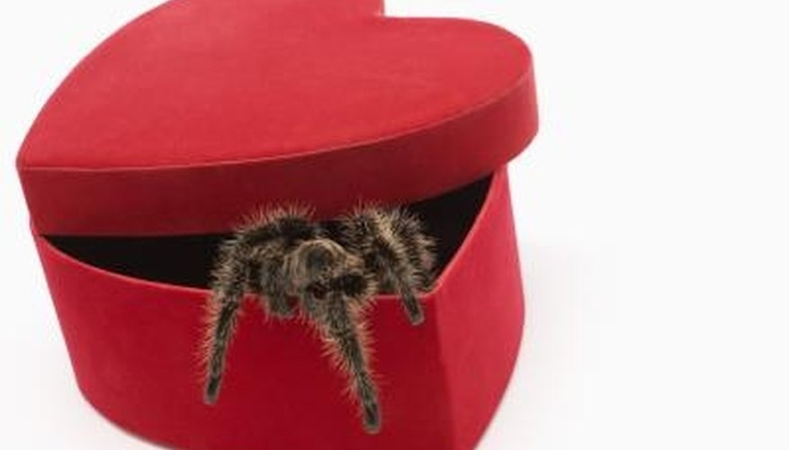 Spider are beneficial, but don't get much love when they take up residence in the bedroom.
