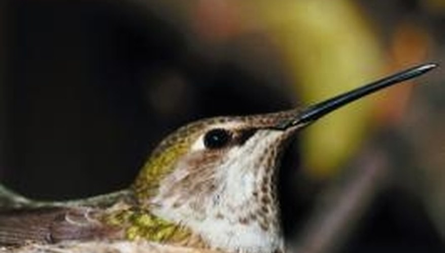 Hummingbirds look for trees near food and sheltered from predators and weather.