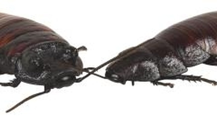 Cockroaches are just one type of inside bug.