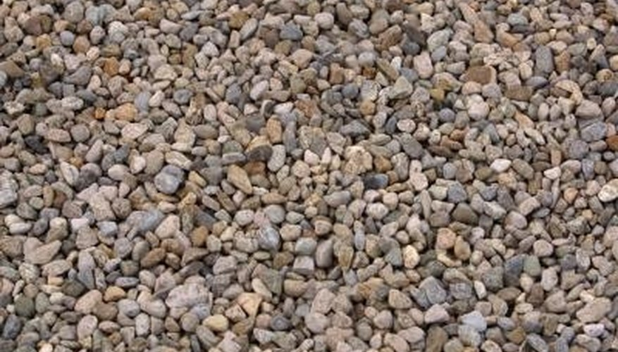 Specific plants can thrive when they're planted in pebbles.
