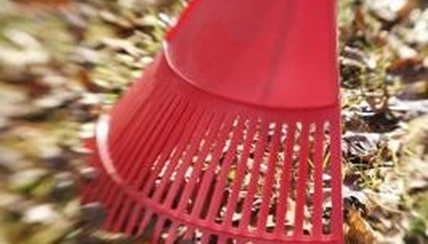 Rake frequently during leaf and seedpod drop.