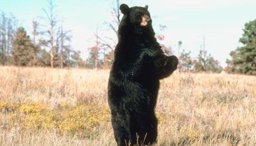 Homemade Bear Bait