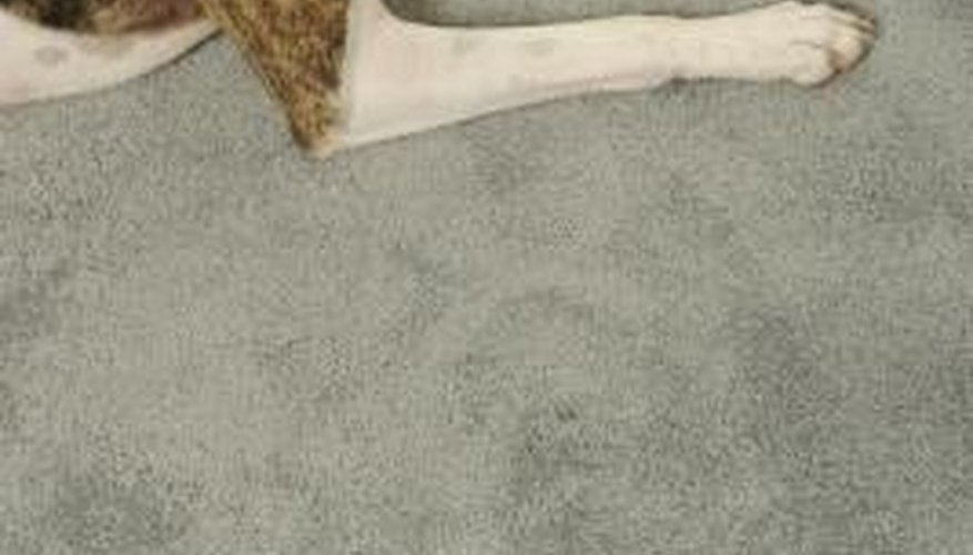 Pets are the usual culprit for urine smells in carpet.