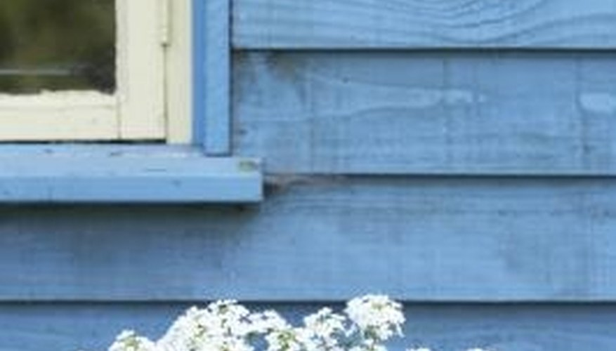 Repairing rotten weatherboarding prevents further damage to your home.