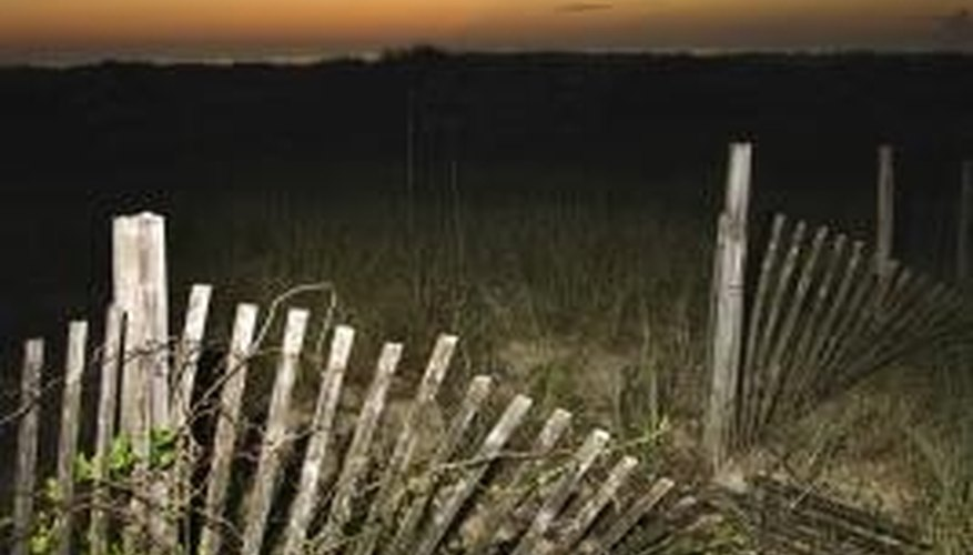 Plants can be very destructive to a fence.