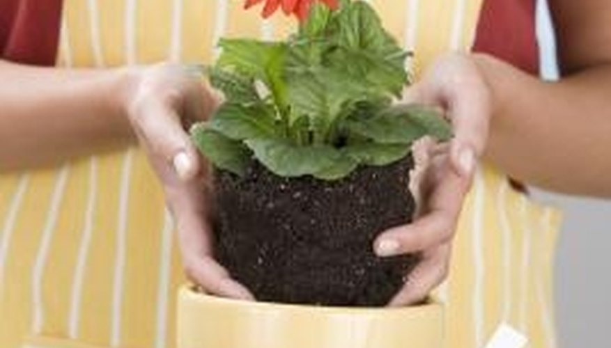 Potting soil is usually benign.