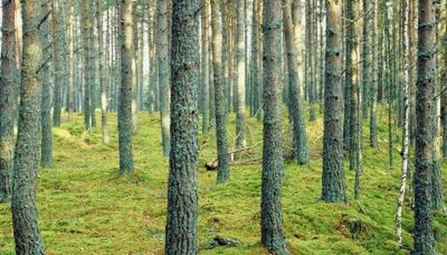 Dense, overgrown woods or too wide of an area require professional assistance to measure straight lines.