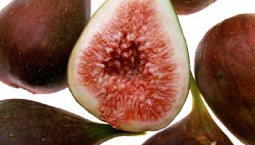 Too much rainfall can cause figs to break open.
