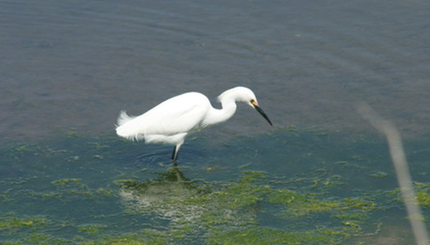 Wetlands are home to many forms of wildlife that depend on a stable pH level.