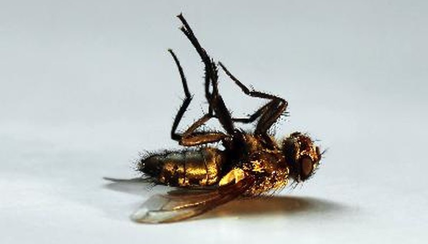 You can kill and repel houseflies without using dangerous pesticides.