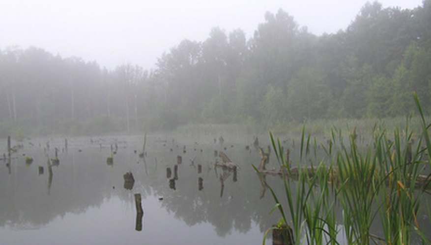Swamps are important parts of freshwater biomes.