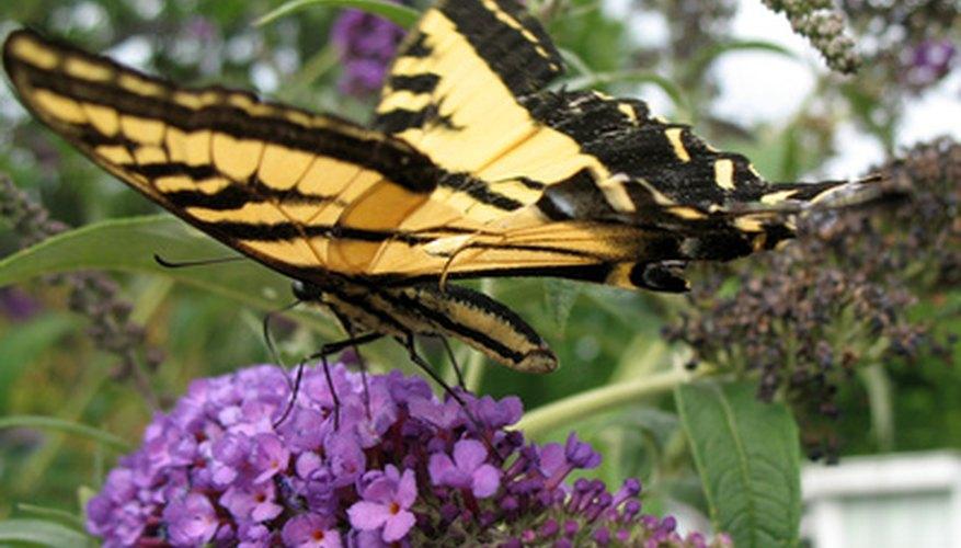 Butterflies make beautiful science projects.