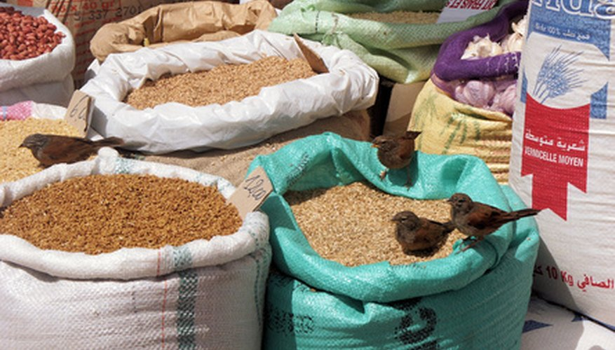 Cultivated crops of millet seed