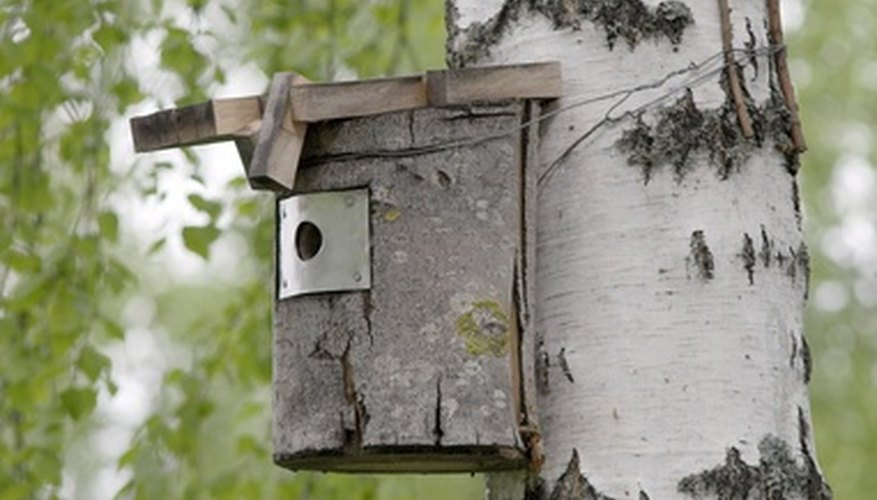 A bluebird house is relatively simple to build.
