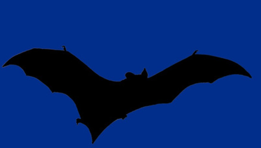 Bat colonies can range from one to 200 animals.