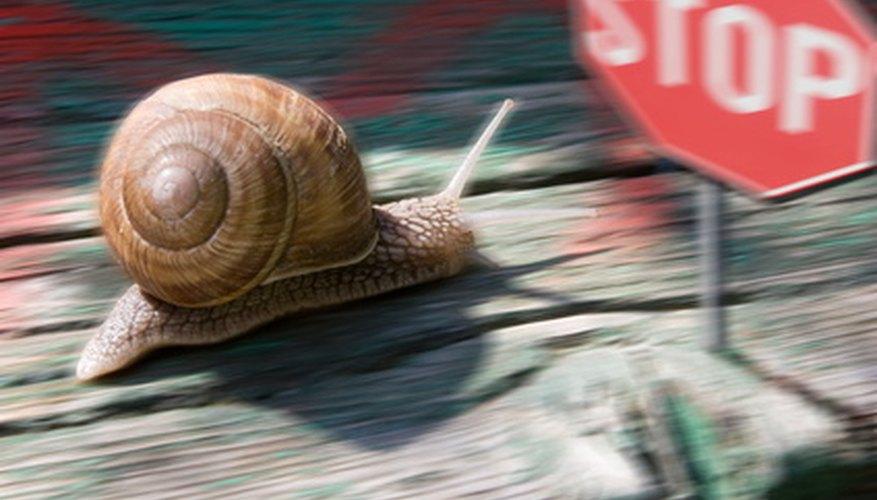 Race snails across different terrains when first-grade students study biology.