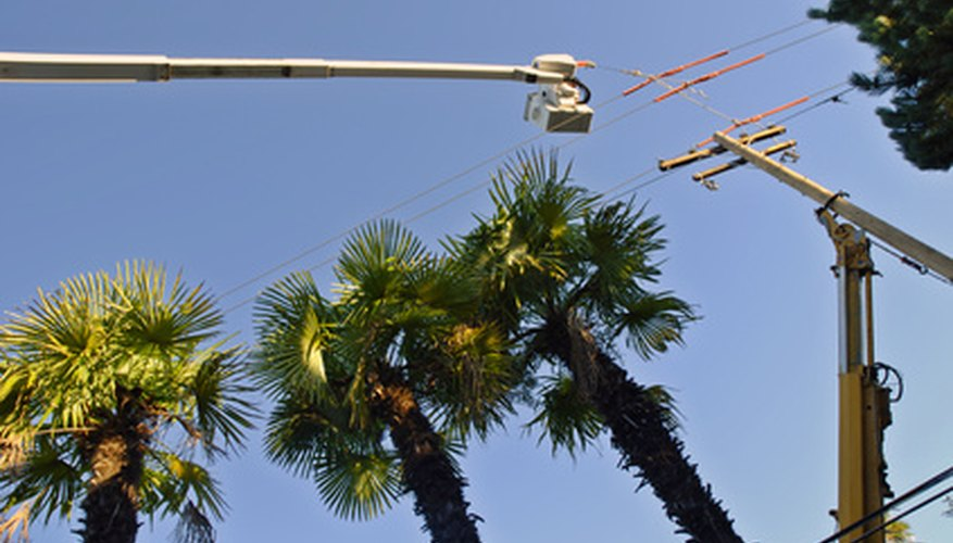 Trees near power lines pose hazards.