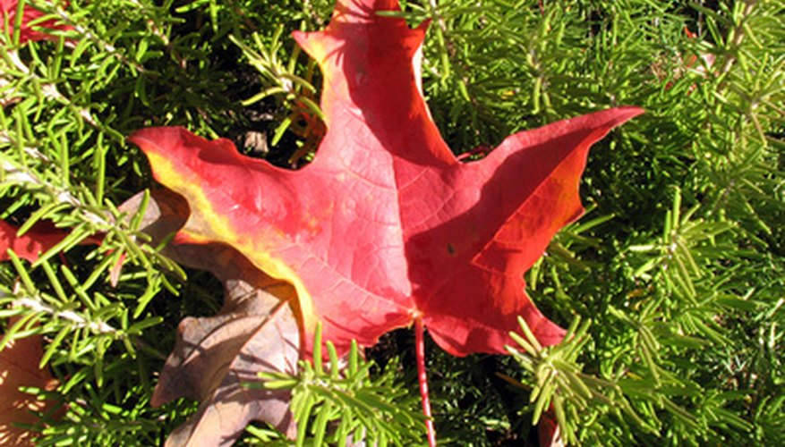 A lawn leaf vacuum keeps dead leaves off your yard.