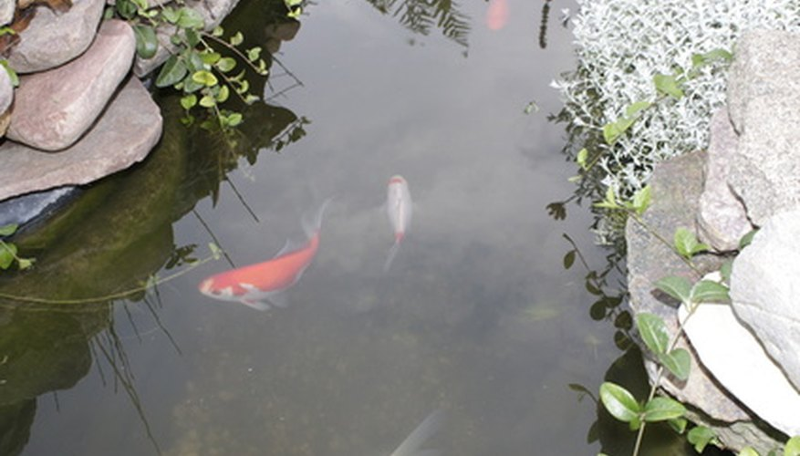 Making a fish pond from concrete will provide you with years of enjoyment.