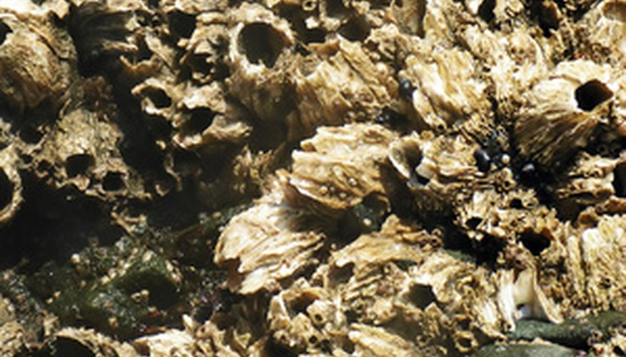 Marine growth such as barnacles can damage ship hulls.