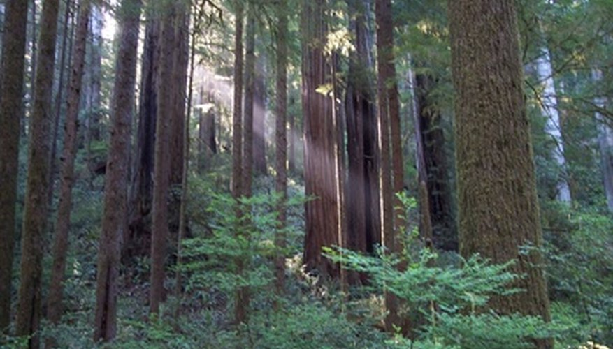 Redwood trees make up part of California's coastal resources.