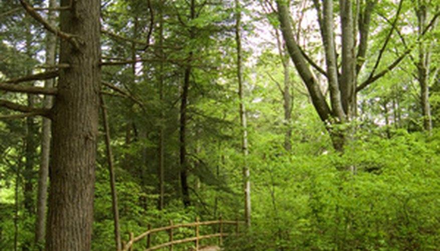 Turn a hike into a treasure hunt of good memories.