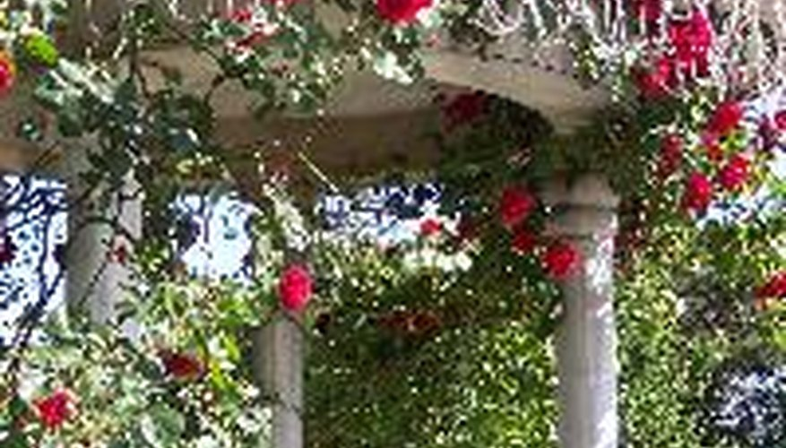 An arbor covered with climbing roses.