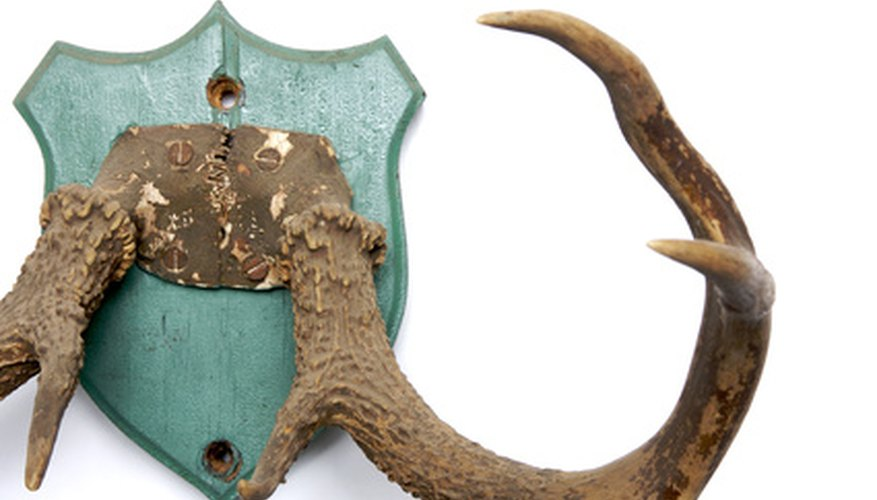 Learn how to make your own mounting plaques and save hundreds of dollars on taxidermy costs for you and your family.