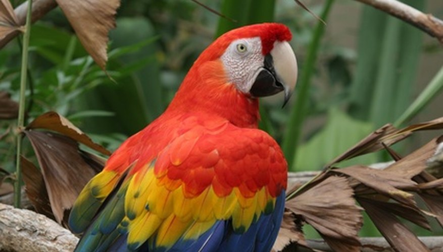 Let macaws inspire some fun crafts.