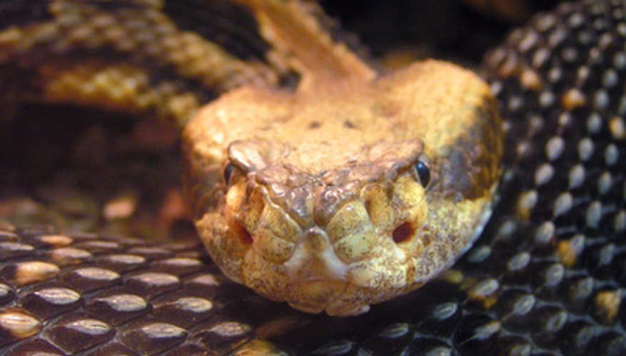 Certain types of snakes may be illegal to kill.