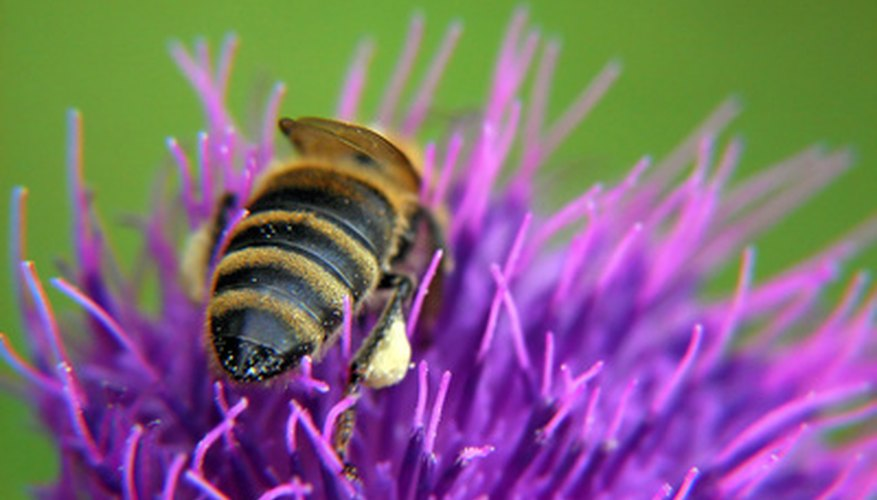 Insects collect pollen as they travel.