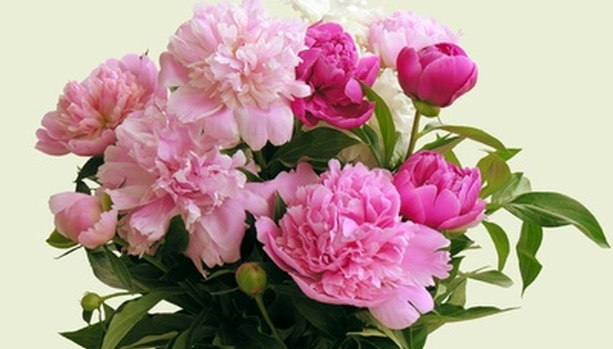 Peonies are available in many colors.