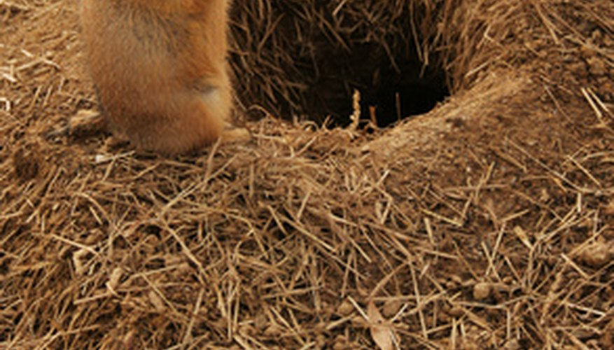 Rodents teach their young to avoid foul-tasting bait.