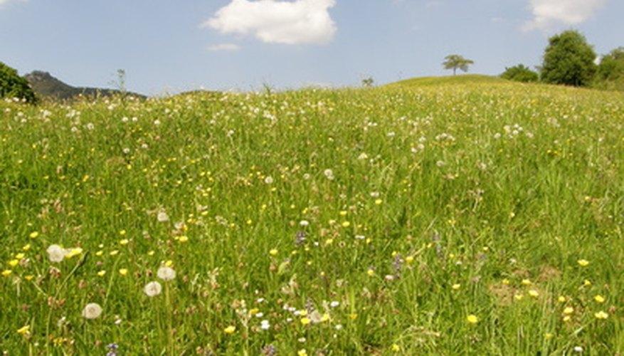 Open prairies are nature's breadbasket.